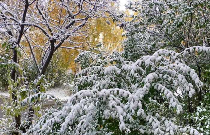 Аллергия кожа зимой